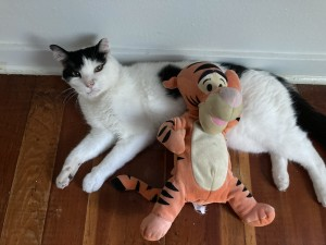 Velcro hanging with Tigger